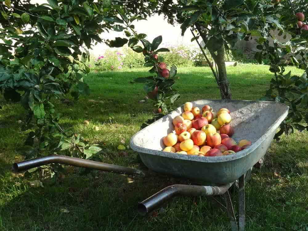 pommes du Domaine de La Reculée proche Sancerre