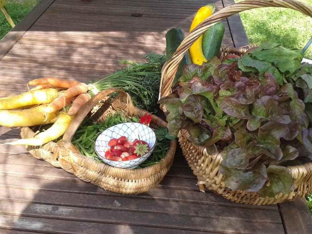 légumes du Domaine de La Reculée proche Sancerre